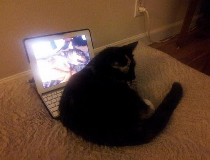 Хозяин застал своего кота перед монитором. Вы не сможете сдержать слёз, когда узнаете, что он делал...