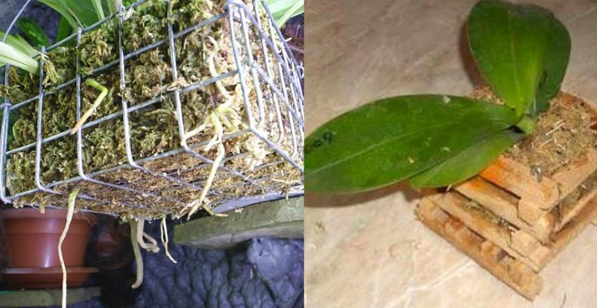 Пышное цветение гарантировано! Просто пересади орхидею в эту емкость… Это должно прекратиться прямо сейчас!!!
