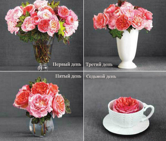 10 трюков, которые помогут надолго сохранить свежесть цветов в вазе... Кстати, полезные советы к 8 марта!