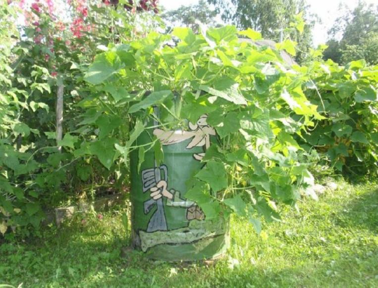 Выращивание огурцов в бочке станет украшением вашего участка... И красиво, и места меньше занимает!