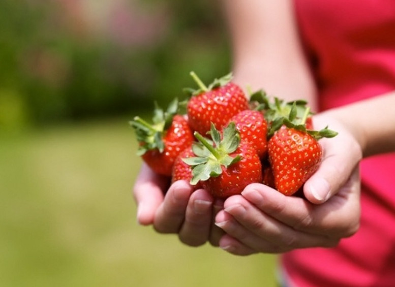 Вот что скрывает заманчивая ягода! Ты больше не купишь такую, увидев это под микроскопом…