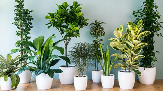 Бурное цветение и пышная листва обеспечены, если полить растения этой простой подкормкой! Вот классный рецепт цветочной подкормки....