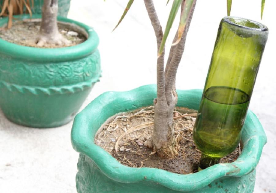 Проводница придумала способ полива комнатных растений... Сколько бы она ни находилась в рейсе, ее цветы не увядают!