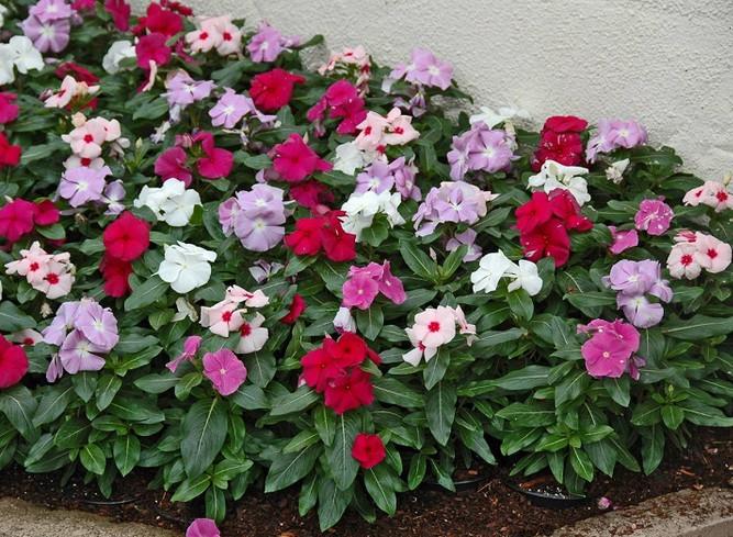 Садовница с 12-летним стажем рассказала, какие цветы лучше посадить на даче, чтобы они цвели все лето! Она выделила 5 видов растений...