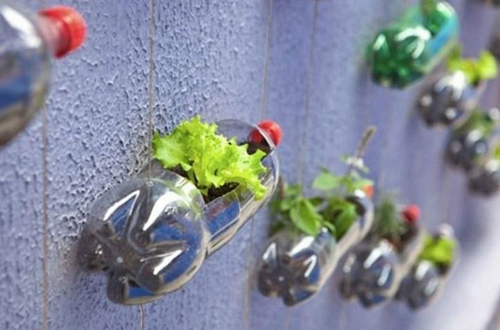 Овощи можно выращивать не на грядке, а в… бутылке! Пенсионер устроил шикарный огород на балконе...