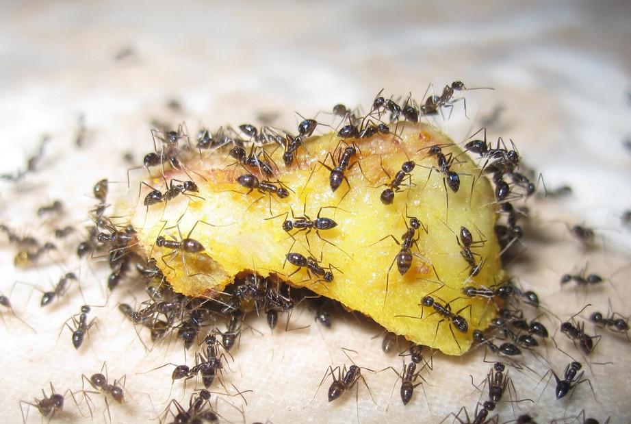 3 способа, как избавиться от муравьев в доме... Ты даже не подозревала, что это так легко!