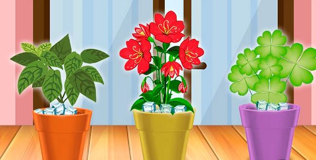 Благодаря этому трюку больше ни один цветок в доме не погибнет