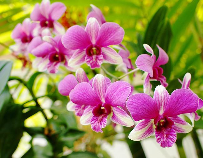 Благодаря этому трюку больше ни один цветок в доме не погибнет! Все, что вам понадобится, – это…
