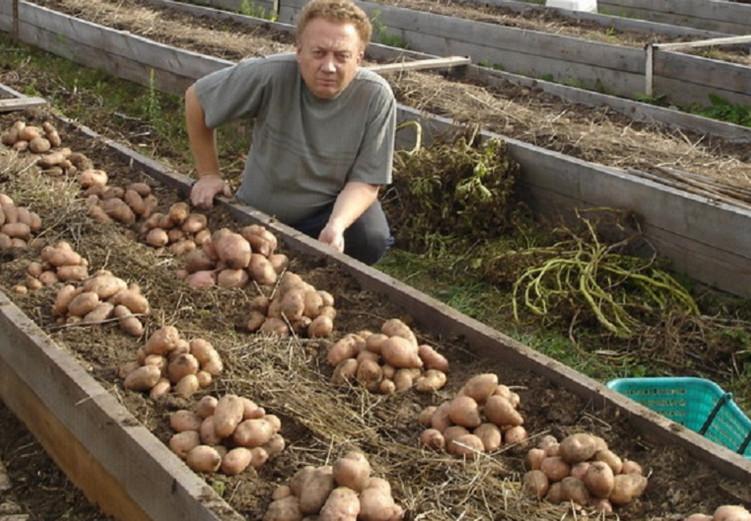 Науникальнейший огород Игоря Лядова!!! Оказывается, Высокие грядки — залог хорошего урожая!