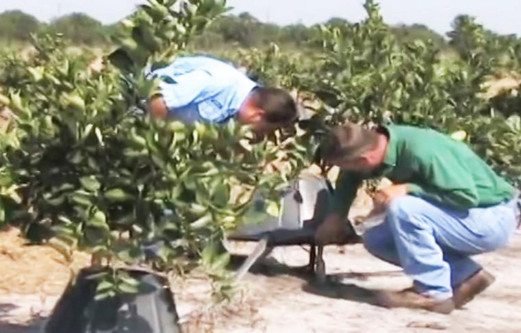 Фермер с 15-летним стажем делится секретом необычайного успеха... Узнав это, ты тоже захочешь поступать именно так!