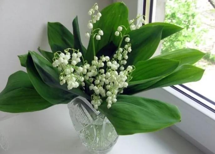 Самые благоприятные комнатные растения... Оказывается, они способны приносить в дом спокойствие и благополучие!