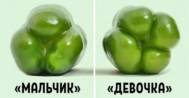 Покупай болгарский перец по этому признаку — и не прогадаешь! Совершенно разный вкус...