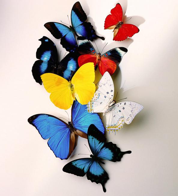 Ах, эти бабочки! Великолепное украшение для дома своими руками, причём за копейки...