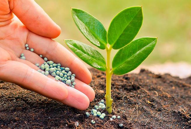 Подкормка для цветов, чтобы росли «как на дрожжах»... Эти подкормки сделают ваши цветы еще красивее!