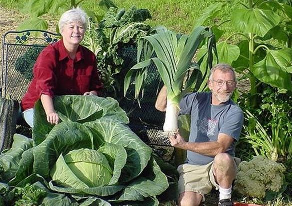 6 удивительных огородных секретов!