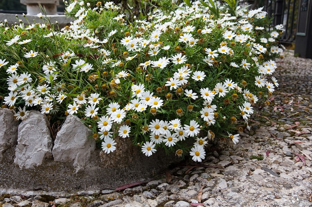Верх удобства! Идеи сада для ленивых... Можно не ухаживать — растет само, и как пышно!