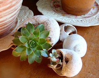 Это самый красивый горшок для растений, который я видела... Отличная идея!
