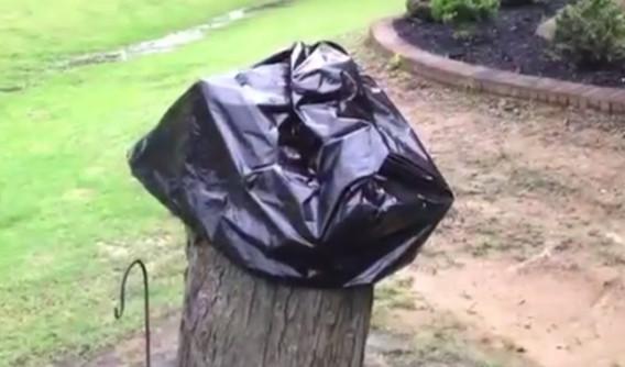 Ее муж срезал засохшее дерево. Спустя 2 недели она сняла с пенька пакет и увидела…