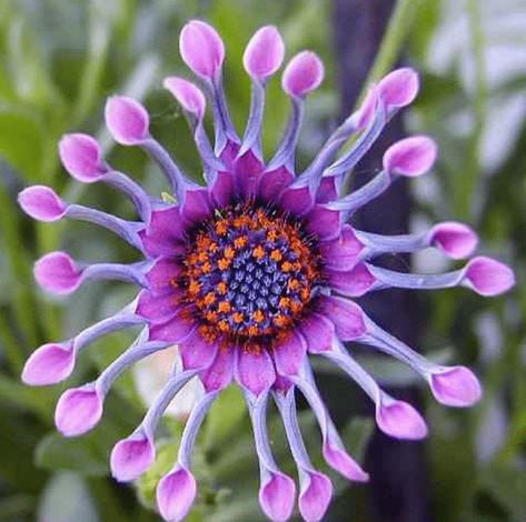 Цветы каких вы еще никогда не видели!