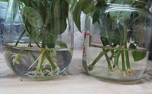 природные растения для повышения потенции