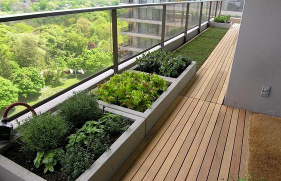 Вот как выращивать свежие зелень и овощи даже не в сезон... Все соседи просят поделиться секретом!