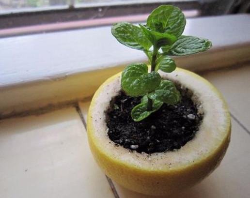 10 странных лайфхаков для сада, которые защищают от вредителей растения и улучшают их рост