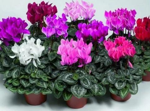 Чем подкармливать комнатные цветы...