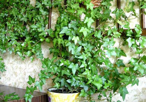 Сестра поместила горсть листьев этого растения в стиральную машину... Результат удивил всю семью!