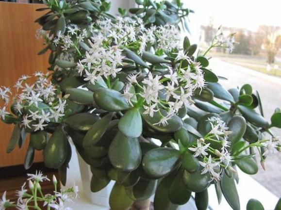 После такой подкормки комнатные цветы растут как на дрожжах! Одной из самых эффективных подкормок считаются обычные...