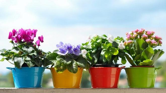 После такой подкормки комнатные цветы растут как на дрожжах...