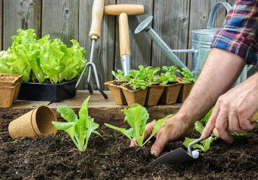 Полное собрание дачных хитростей для садоводов...