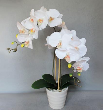 9 правил, благодаря которым орхидея будет буйно цвести круглый год. И всё исключительно своими руками.