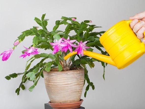 Разведите всего одну таблетку вечером и цветы будут радовать вас весь год! Кто-то уже так сделал?