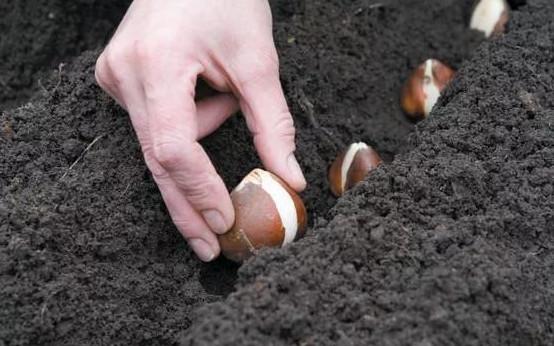 Что можно посеять и посадить в огороде осенью...