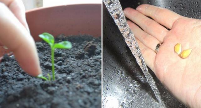Заглянула к подруге в гости... Вот что она выращивает на подоконнике вместо зелени и цветов!