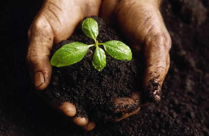 Полезные советы дачникам: секреты черенков, какую пользу несут отходы