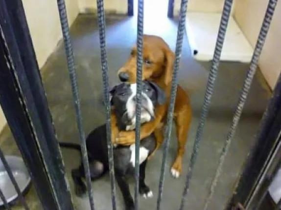 Перед эвтаназией собаки начали обнимать друг друга и это спасло им жизнь...