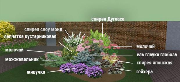 Клумбы непрерывного цветения – схемы с описанием цветов...