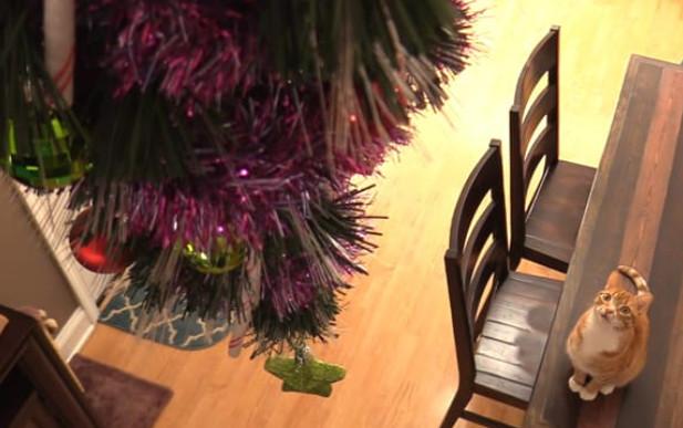 25 гениальных хозяев, которые «спрятали» новогодние елки от своих питомцев...