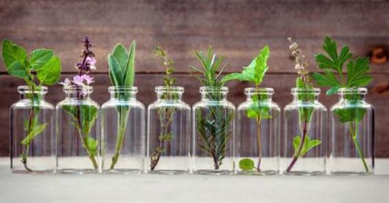 Эти травы вы можете вырастить в стакане с водой круглый год...