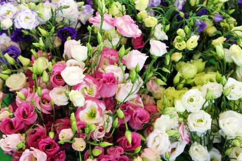 Цветы, которые необходимо сеять на рассаду уже в январе...