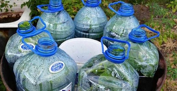 Новейший способ: огурцы в бутылках! Очень удобно и выгодно.