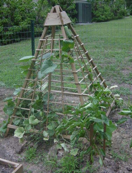 Огуречная пирамида... Интересная идея на заметку!