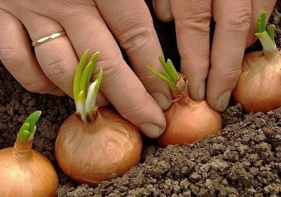 Советы садоводам и огородникам урала