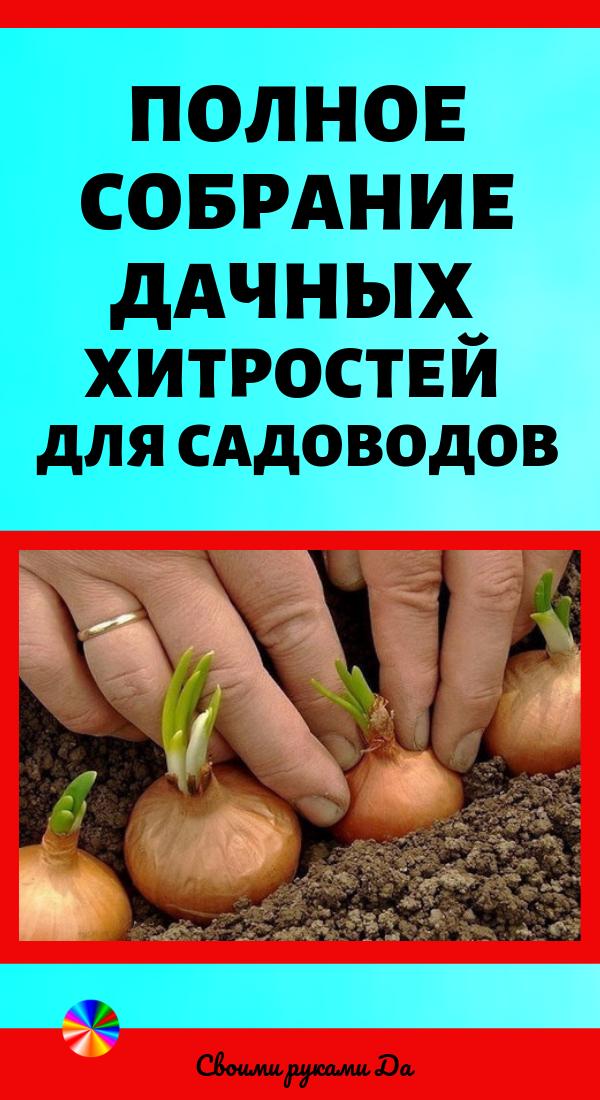 Советы для дачников и огородников по выращиванию своими руками