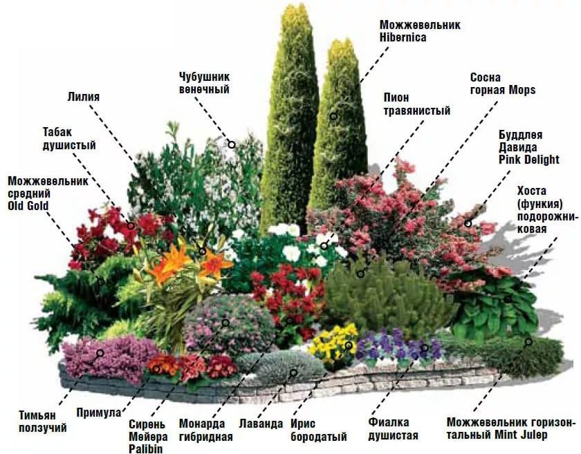 аналогов картинки цветов для клумб с названиями что торчащее радовало