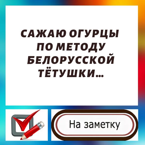 Сажаю огурцы по методу белорусской тётушки...