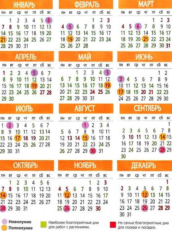 Календарь посадки рассады на 2019-й год + полезные советы дачникам