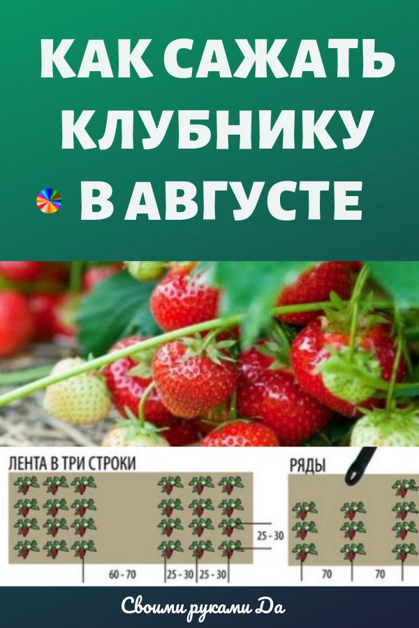 Как правильно посадить клубнику в августе, чтобы получить превосходный урожай на будущий год? Мы собрали в одной статье самые простые рекомендации, интересные советы и секреты, которые гарантируют вам наслаждение вкусными и ароматными плодами этой удивительной ягоды.