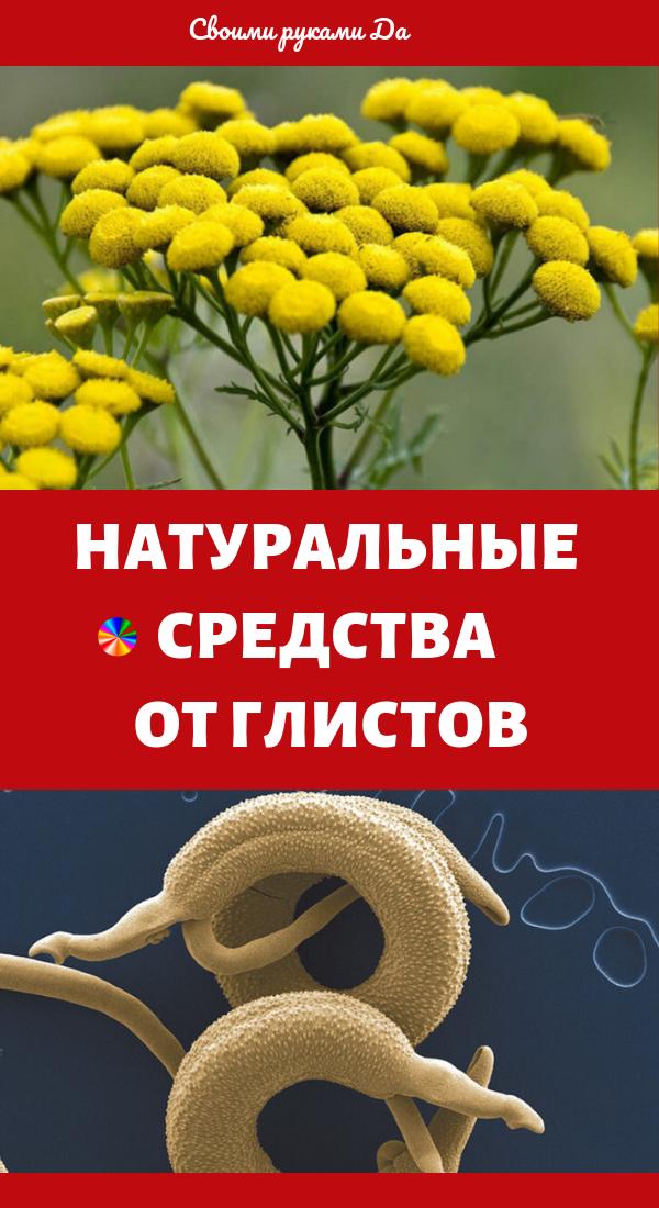 Народные средства от глистов и паразитов у человека в домашних условиях